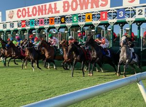 horses at the starting line
